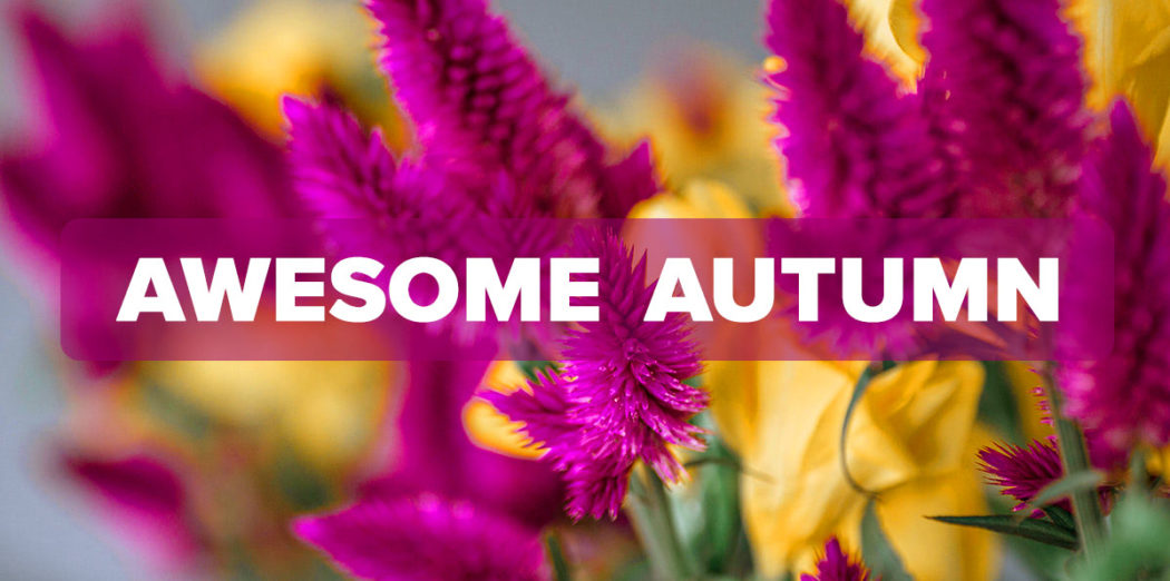 FM4-Bold—Awesome-Autumn—Blog